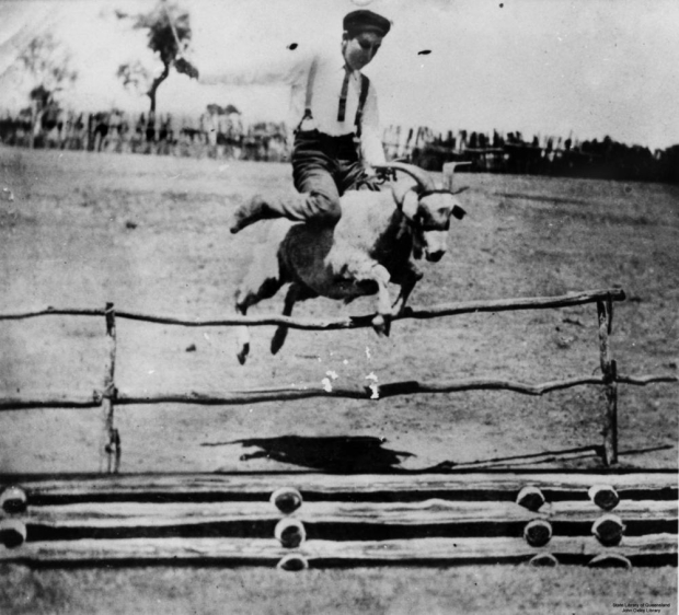 A man riding a goat over a high jump in Blackall, Queensland, 1905